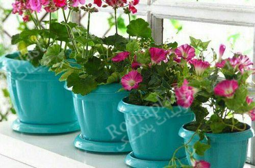 انواع گلدان